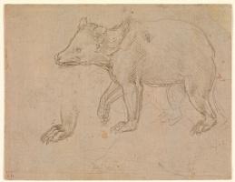 Леонардо да Винчи. Прогулка медведя