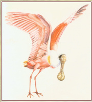 Питер Барретт. Птица