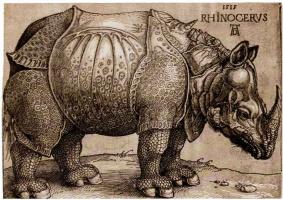 Альбрехт Дюрер. Носорог