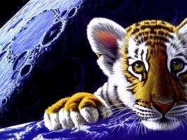 Шим Шиммель. Тигр в космосе