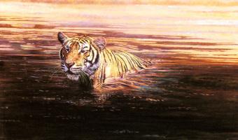 Дарбиндер Сингх Бамра. Тигр
