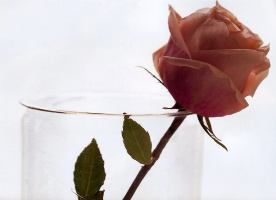 Мария Робледо. Роза