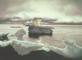 Дональд Руст. Белый медведь на льдине