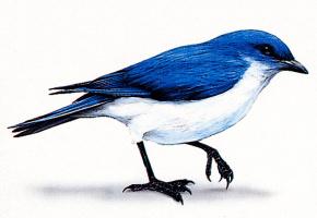 Джек Грабер. Синие крылья