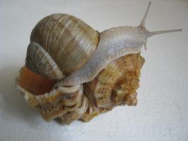 "Alexey Grishankov (Alegri). ""Snail on the shell"""