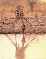 Джон Банович. Жираф