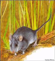 Тони Оливер. Австралийские вымирающие виды 17