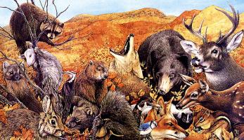 Джек Грабер. Животные