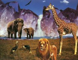 Барри Чал. Кристаллы и животные