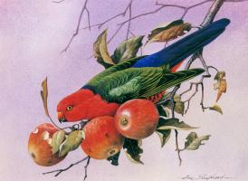 Эрик Шеферд. Королевский попугай