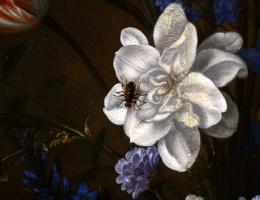Балтазар ван дер Аст. Цветы в вазе Ван-Ли и раковины. Фрагмент: муха на цветке
