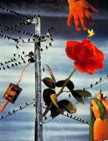 Ампаро Сегарра. Красная роза
