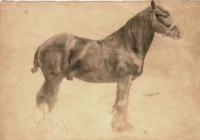 A work horse