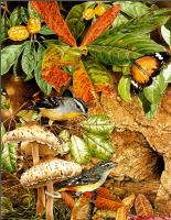 Тони Оливер. Птицы строят гнезда 01