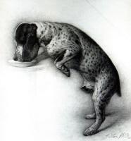 Стоун Робертс. Собака