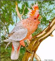 Тони Оливер. Австралийские вымирающие виды 03