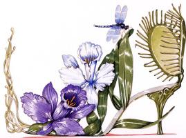 Деннис Кайт. Орхидея и мухоловка