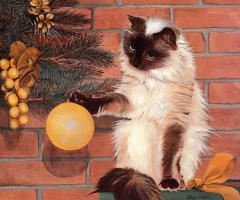 Lin Estall. The cat and the Christmas toy