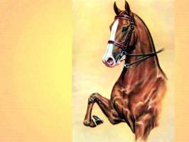 Дональд Шварц. Лошадь 3