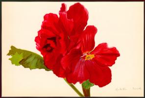 Арлетт Дэвидс. Красный цветок