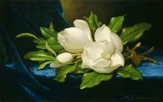 Martin Johnson Head. Huge magnolias on blue velvet