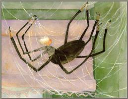 Джейн Дайер. Паук в паутине
