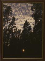 К. Грещук. Закат в лесу