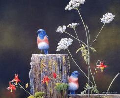 Сьюзан Бордет. Лазурные птицы