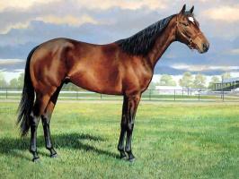 Пэрис Клейтон Вейрс. Лошадь в поле