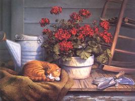 Виндберг Далхарт. Рыжий кот