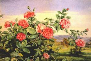 Джон Уильям Хилл. Красные розы