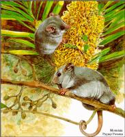 Тони Оливер. Австралийские вымирающие виды 13