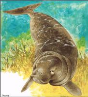 Тони Оливер. Австралийские вымирающие виды 26