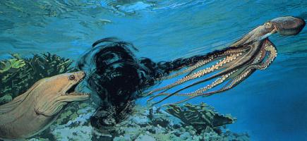 Джон Бакстон. Под водой