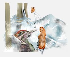 Дятел, клюющий лисий хвост