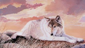 Труди Эстес. Волк