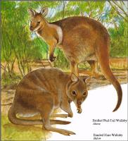 Тони Оливер. Австралийские вымирающие виды 22