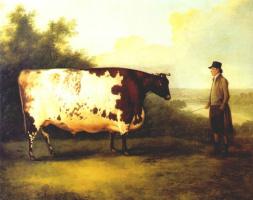 Боултб. Корова