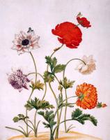 Мария Сибилла Мериан. Разноцветные цветы