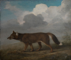 Джордж Стаббс. Большая собака (Динго)
