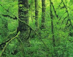 Элиот Портер. Лесной пейзаж 6