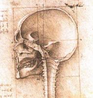 Леонардо да Винчи. Череп