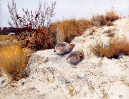 Питер Верстаппен. Природа 44