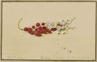 Fedor Petrovich Tolstoy. Red and white currants