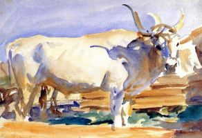 John Singer Sargent. White ox at Siena