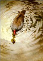Пенни Олсен. В воде