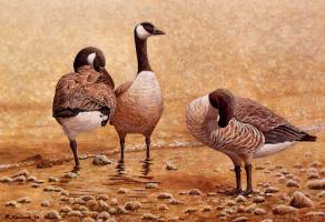 Ричард Кермод. Птицы