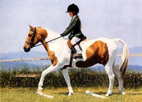 Патриция Борк. Верхом на коне
