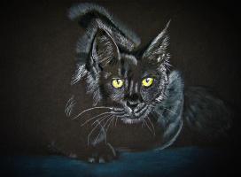 Elena Epishina. Black cat in a dark room