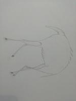 John shelckopruad. Лошадь